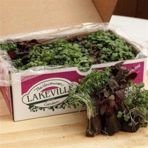 Specialty Microgreens